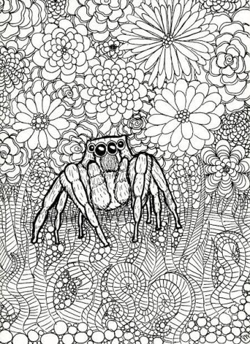 jumping spider drawing.jpg
