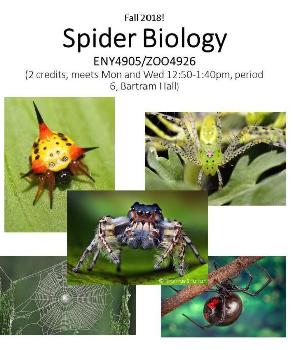 Spider_bio_flyer_2018_wh