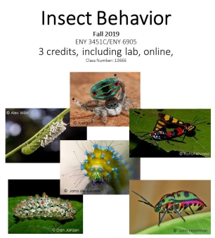 Insect_behavior_flyer_fall_2019