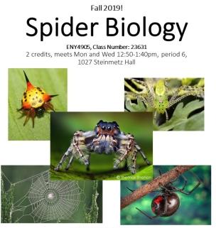 Spider_bio_flyer_2019_wh